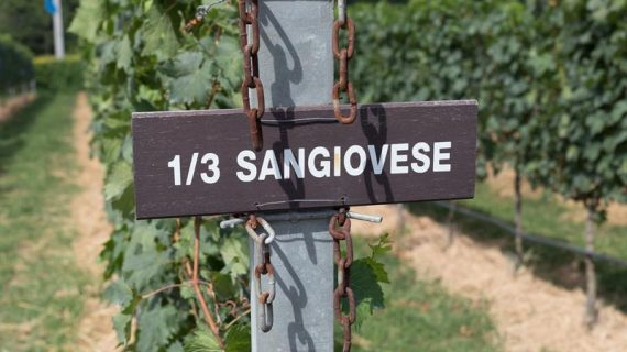 Uva Sangiovese: Conheça os segredos da rainha dos vinhos italianos