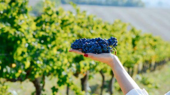 Vinhos italianos: Os segredos do maior produtor do mundo