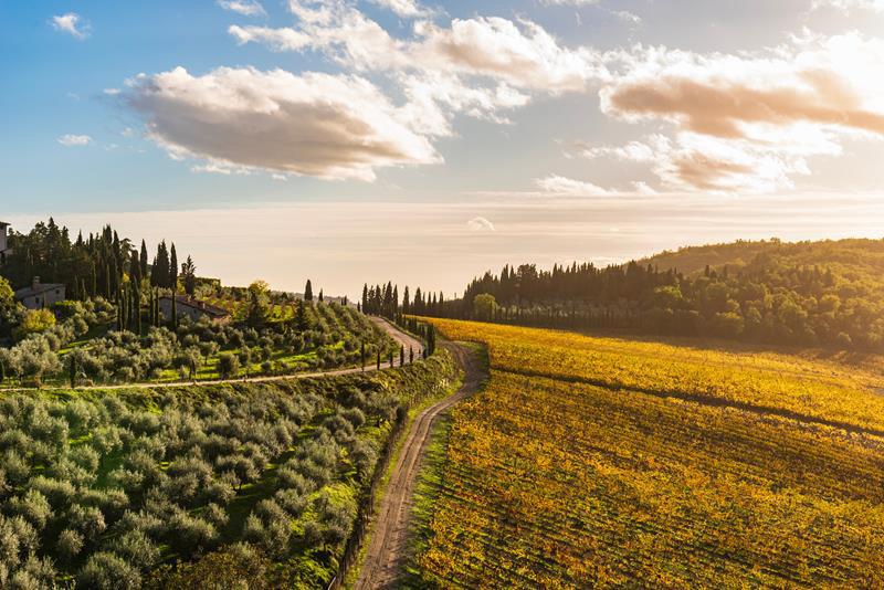 Como os diferentes tipos de solos influenciam a produção de vinhos